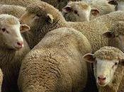 Social Media Herd Instinct