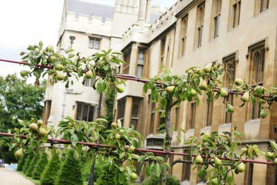Lambeth Palace Gardens