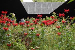 Prairie Style Planting to Courtyard by Piet Oudlf Zumthor Serpentine Pavilion 2011