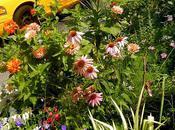 Guerilla Gardening....update