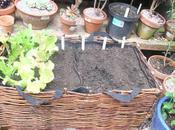 Edible Planter