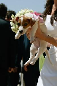 Become a Top Wedding Planner – Planning Weddings with Dogs