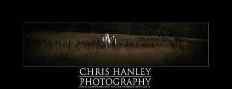 bride on horseback photoshoot (2)