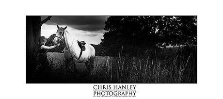 bride on horseback photoshoot (4)