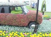National Flower Beds Tatton