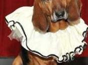 Barkarole? Tannschnauzer? Opera Company Seeks Calendar Dogs!