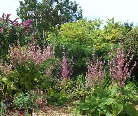 Denmans Garden and a few plant questions for you.