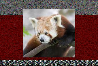 "the red panda essay Ailuropoda melanoleuca otherwise known as the ""giant panda"" is categorised  on the iucn red list  factors increasing extinction rates in giant."