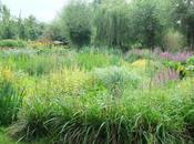 Watery Garden