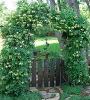 Green Gates and The Green Man