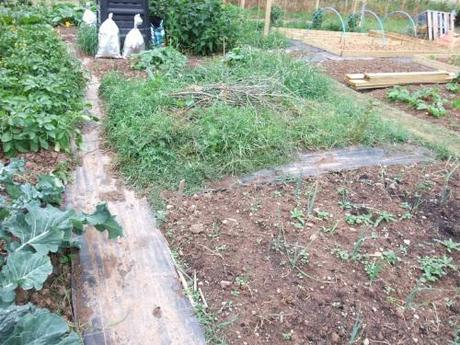 Leeks in need of weeding and uncultivated big bed