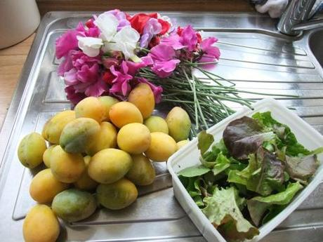 Today's harvest Sweet Peas, salad leaves and hedgerow plums