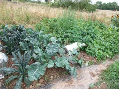 PSB, Carvelo Nero, potato patch and the silver hop bags