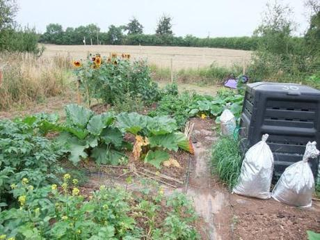 top of potato patch with fruit area behind