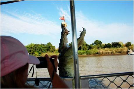 An Amazing Shot of 18ft Crocodile 2