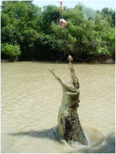 An Amazing Shot of 18ft Crocodile3