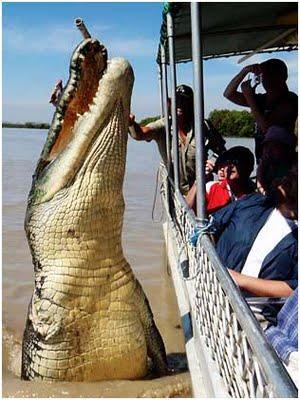 An Amazing Shot of 18ft Crocodile title post 0