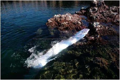 Damn Weird Long Silver Fish 4