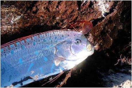 Damn Weird Long Silver Fish 3