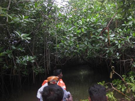 Trip to Pichavaram