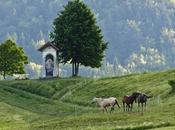 Where Should Slovenia