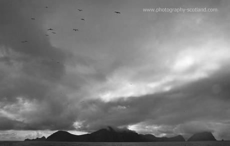 Photo - Gannets soaring above Hirta and Soay, St Kilda, Scotland