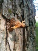 2011: THE YEAR OF THE CICADA