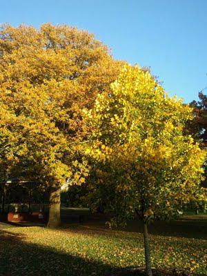 Autumn is...
