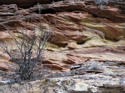 2011 - March 1st - Lower Flume Creek Canyon, McInnis Canyons National Conservation Area/Black Ridge Canyons Wilderness