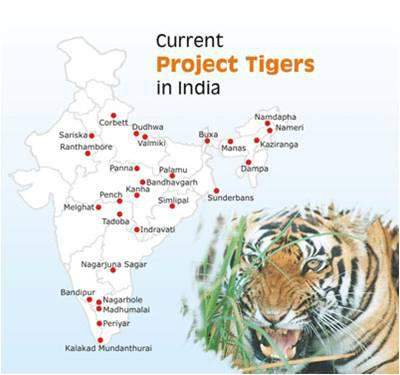 Project tiger in india essay   Research paper Service