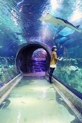 SEA LIFE Grapevine Aquarium - Paperblog