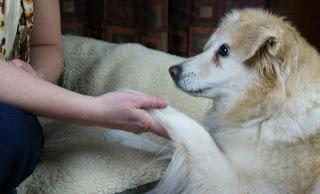The How's and Why's of Dog Training - What Are Your Options?