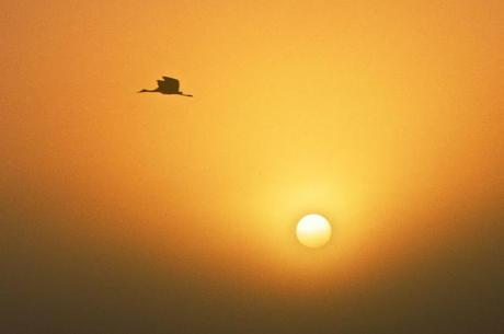 Sandhill Cranes at Sunrise 2