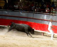 BULLFIGHTING IN SOUTHERN FRANCE: The Course Comarge, Guest Post by Gwen Dandridge