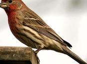 Birds Capture Flight