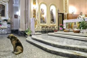 Loyal dog continues to attend mass at church where owner's funeral was held
