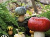 Toadstools Topiaries, Creative Mushroom Projects Your Garden