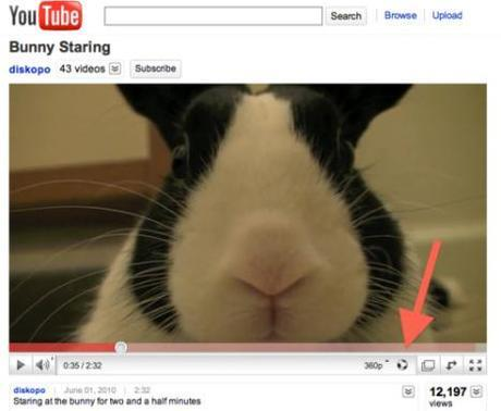 Kick Back and Enjoy Some of YouTube's Cutest Videos
