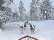 Husky Racing Lapland!