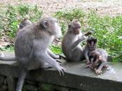 Taming Fear Bali's Sacred Monkeys