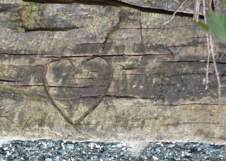 Moss highlights the outline of a heart carved into an old log at Stephenson Point in Nanaimo (submitted by Tony B.)