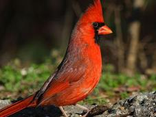 Winter Bird Adoration