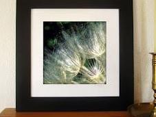 Golden Rays Evolving Dandelion Photograph