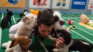 Puppy Bowl Sunday: survival of the cutest