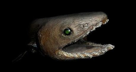 Most Bizarre Looking Sharks On Earth