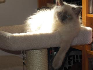 The Week in Kitten - 03 February 2013