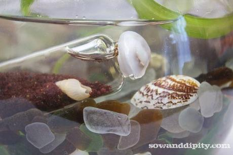 Sea glass with shell