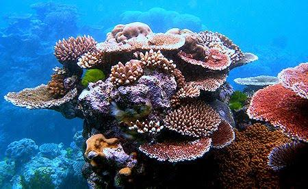 How Do Corals Survive In The Hottest Reefs On The Planet?