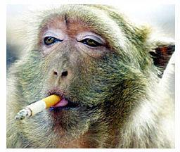 10 Animals Addicted To Cigarettes