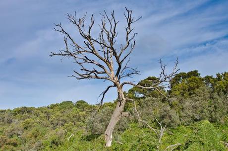 large bare tree